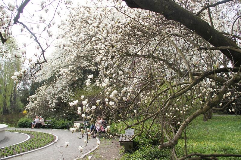 Ogród Botaniczny już otwarty dla zwiedzających