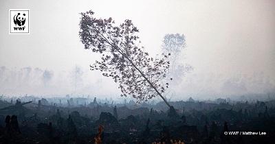 Wykorzystanie oleju palmowego na świecie. Najnowszy Ranking WWF.