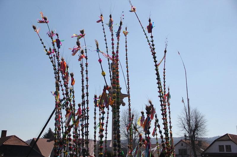 Najpiękniejsze i najwyższe palmy w Lipnicy Murowanej
