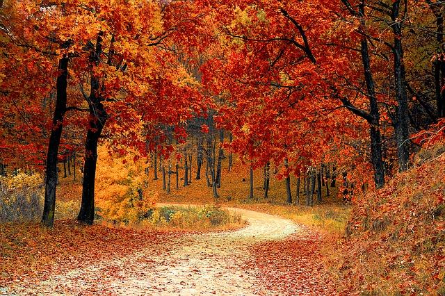 Jesień pełna skarbów