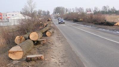 Kolejna próba zamachu na drzewa oraz gatunki chronione