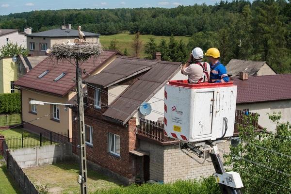 Bociany pod opieką energetyków Grupy TAURON