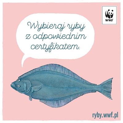 Jakie ryby kupować? Nowy poradnik WWF już dostępny!
