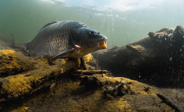 Polskie ryby dochodzą do głosu