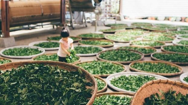 Zielona herbata w kosmetykach