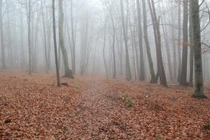 Czerwona ścieżka dydaktyczna przez Dolinę Eliaszówki