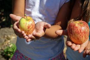 Jak przekonać dzieci do warzyw i owoców?