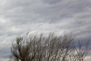 Wapiennik - ścieżka ornitologiczna w Kamieniu z dziećmi