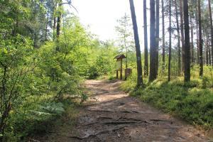 Rezerwat przyrody Czartowe Pole z dziećmi