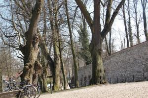 Kraków - Tyniec wycieczka rowerowa z dzieckiem