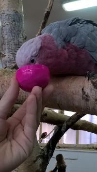 Wyjdźże z dzieckiem - Papugarnia